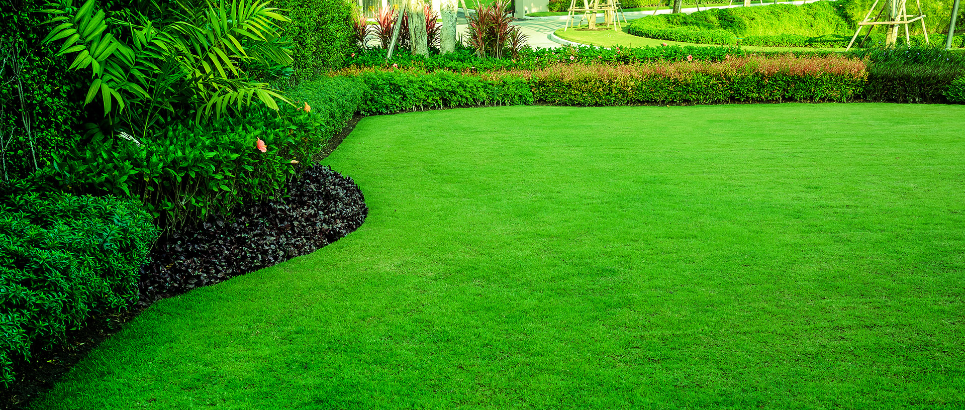Green lawn of home